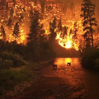 Charcoal produced by wildfires can help mitigate climate change